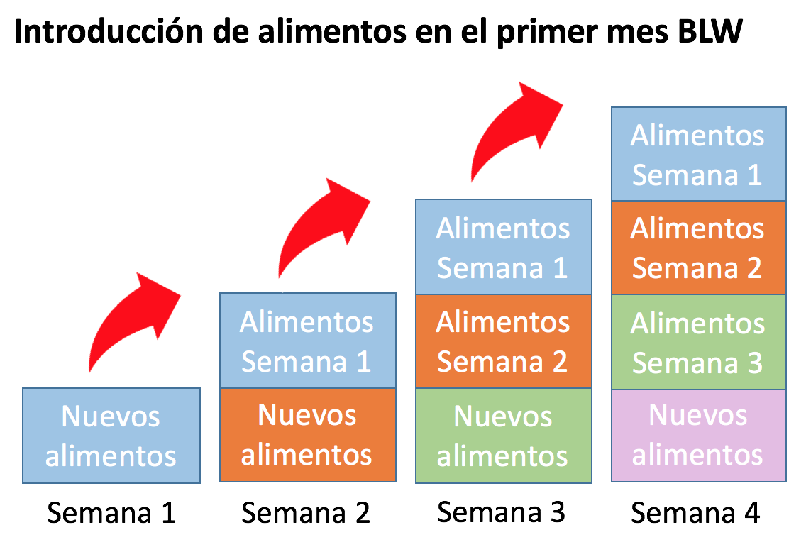 Introduccion alimentos blw 2