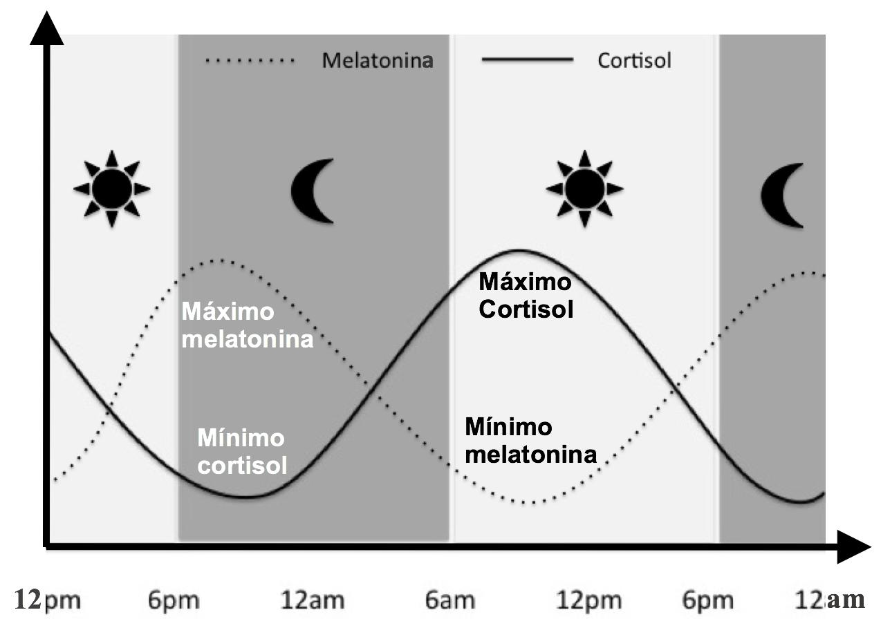 Ciclos de generación de melatonina y cortisol