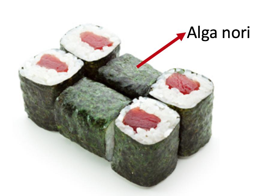 alimentos prohibidos embarazo nori