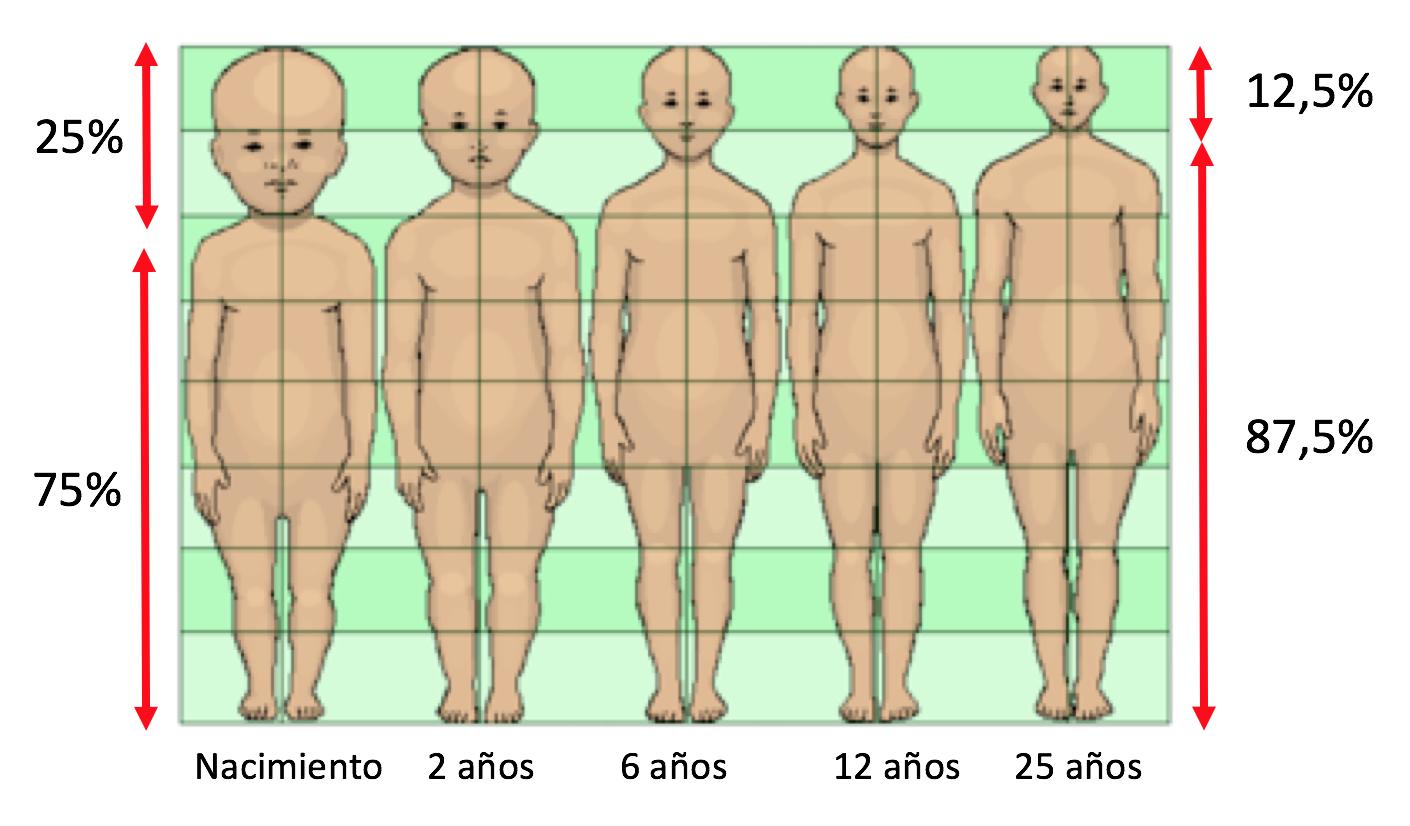 a contramarcha - proporciones_cabeza