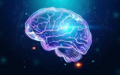 El cerebro del niño: 5 claves para potenciar su desarrollo