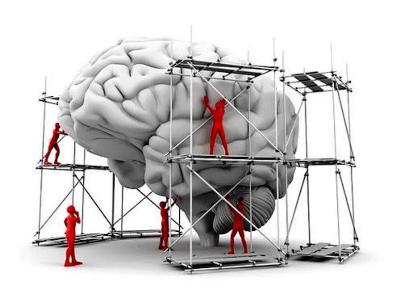 el cerebro del niño en construccion