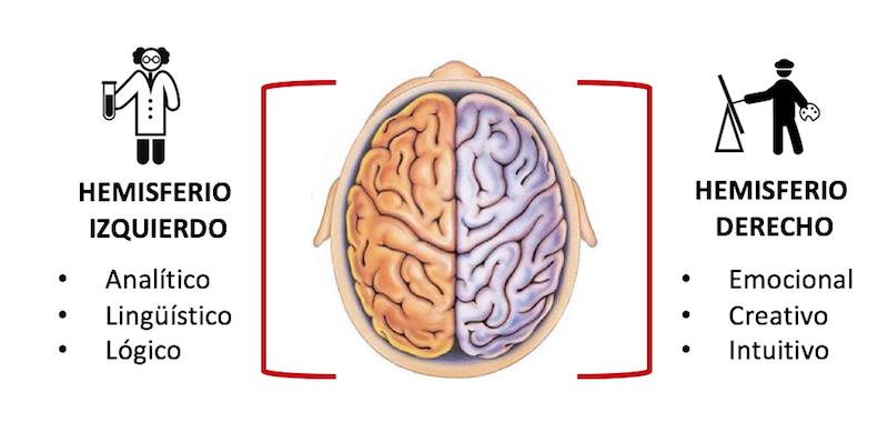 el cerebro del niño - hemisferios2