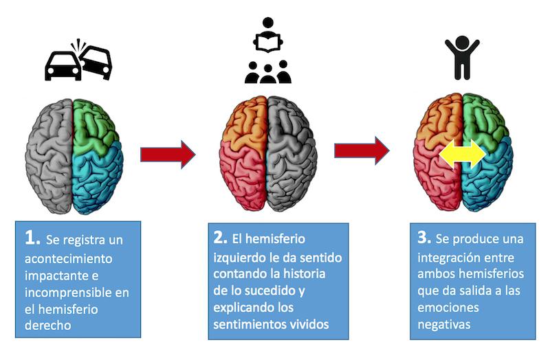 el cerebro del niño - secuencia hemisferios