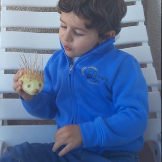 Actividades con niños - erizo