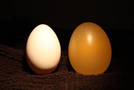 Actividades para niños - huevo y vinagre
